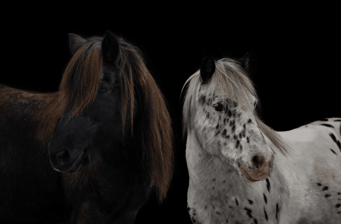 Reitschule_Klein_Pony_3
