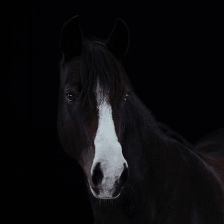 Reitschule_Klein_Pony_2