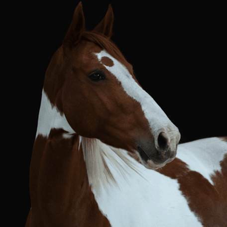 Reitschule_Klein_Pony_5