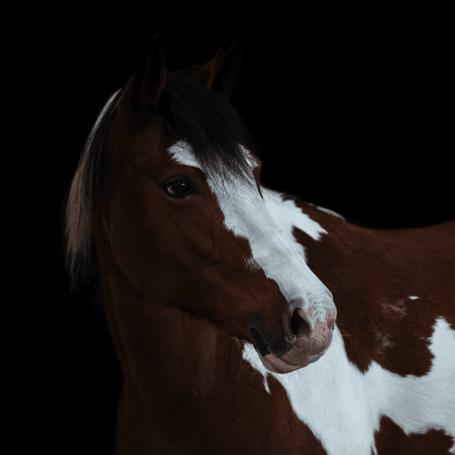 Reitschule_Klein_Ponys_7